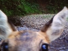 Deer photo taken by wildlife camera in the Tore of Troup